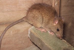 How to Prevent Lassa Fever Infection